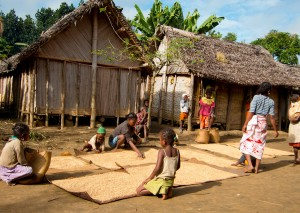 People drying rice on mats in Antenina village in eastern Madagascar.