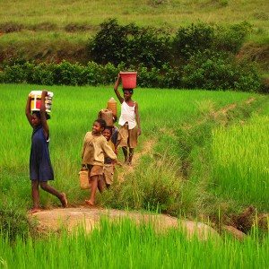 Madagascar March-April 2010: kids hauling water across a rice field