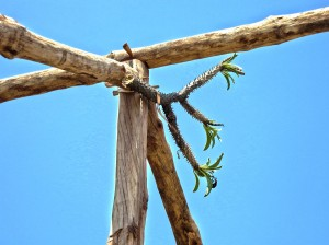 "A ""bouquet"" tied to the main roof beam of a new house being built, to prevent curses from the ancestors regarding the new home."