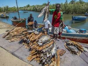 Dried fish unloaded at Port St Louis to be sold.